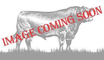 Image Coming Soon_Final.jpg