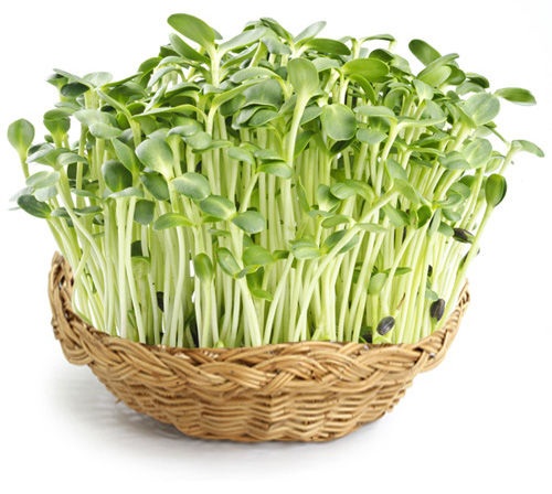 sunflower-sprouts.jpg