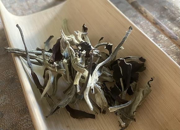 sold out! 月光白(雲南古樹から白茶工程で製茶) 20g