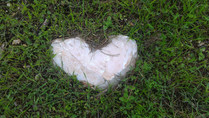 עושות אהבה- לינת שטח ביער Women's circle