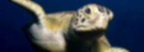banner-turtle.jpg