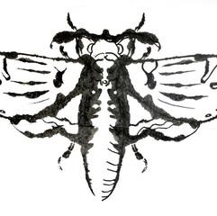 Motte