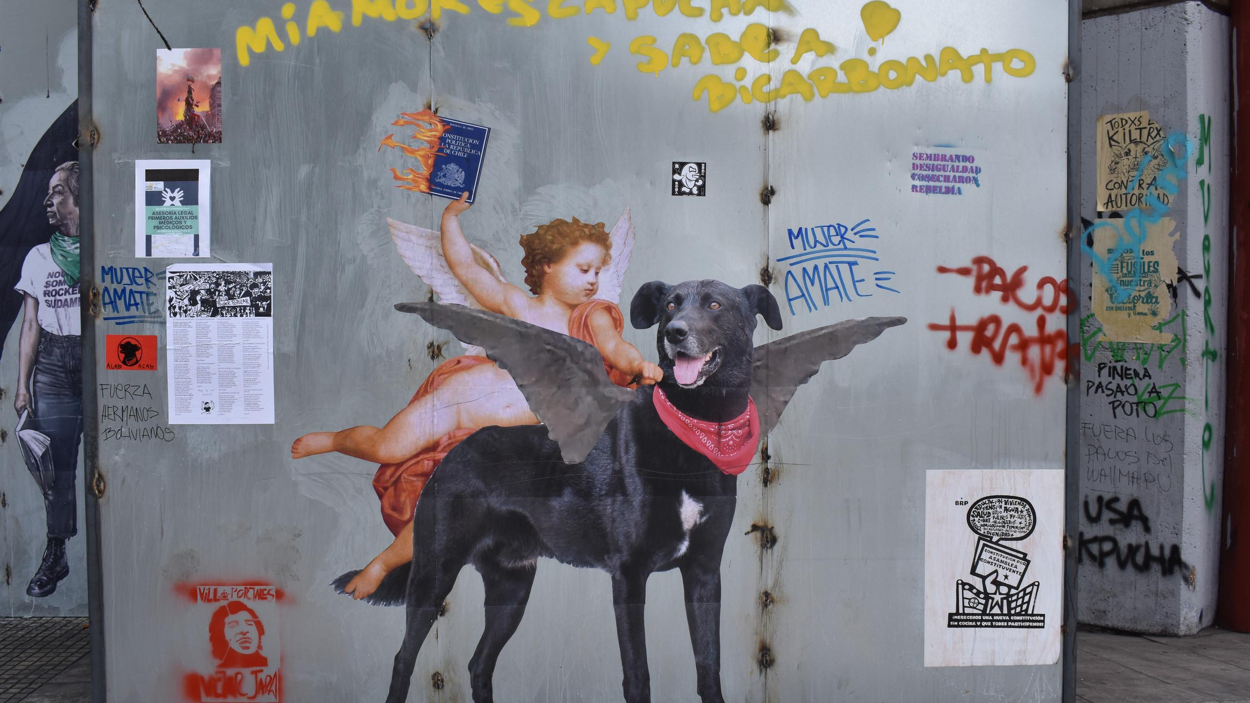 Cane simbolo delle proteste e Costituzione in fiamme