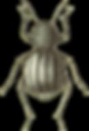bug.png