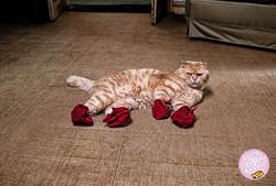HUBBA-CAT
