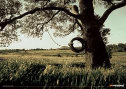 TREE_edited