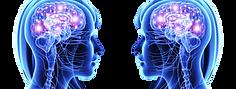 לוגו מוחות.png