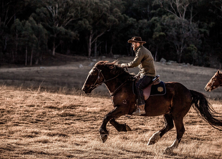 OO_WV_Lifestyle_Horses_Galloping_Field_3