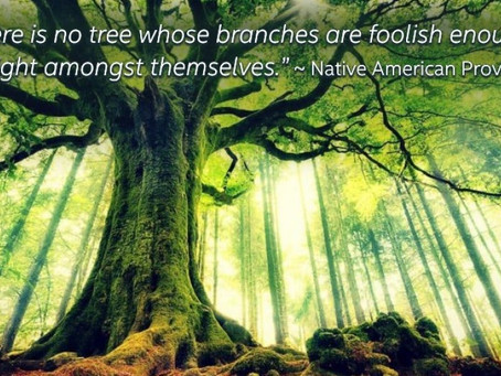 There Are No Foolish Trees