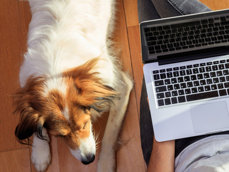 Investigan por estafa a dos ourensanos que fingían vender cachorros por Internet
