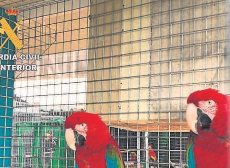 23 detenidos por tráfico de especies protegidas e incautadas 280 aves en Sevilla