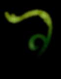 vine-2449747_1920_edited.png