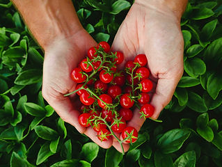 Cherry Tomatoes Aqua Garden.jpg
