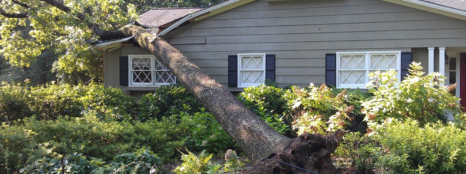 tree service bellingham, tree removal, tree sevice, tree service near me, tree removal near me