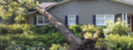 tree service bellingham, tree removal, tree sevice, tree service near me, tree removal near me