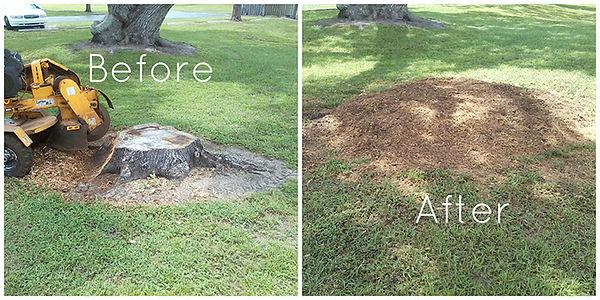 tree removal, tree service, tree service near me, tree removal near me