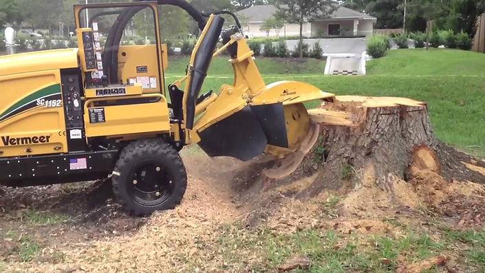 tree removal, tree service bellingham, tree service near me, tree removal near me,