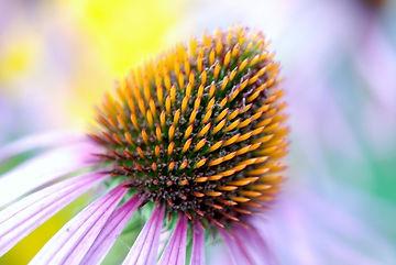 bloom-22786_960_720.jpg