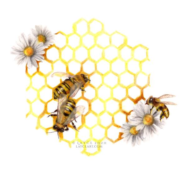 Honeybee | Giclée Print