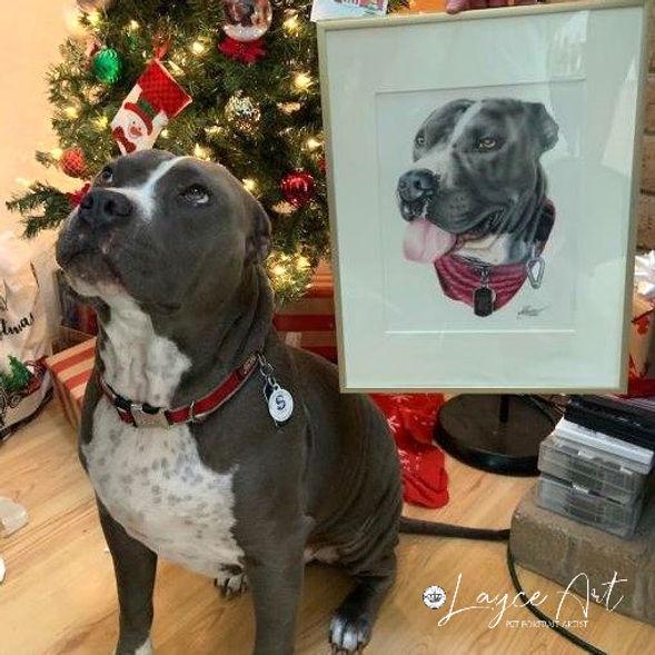 Layce art review pitbull