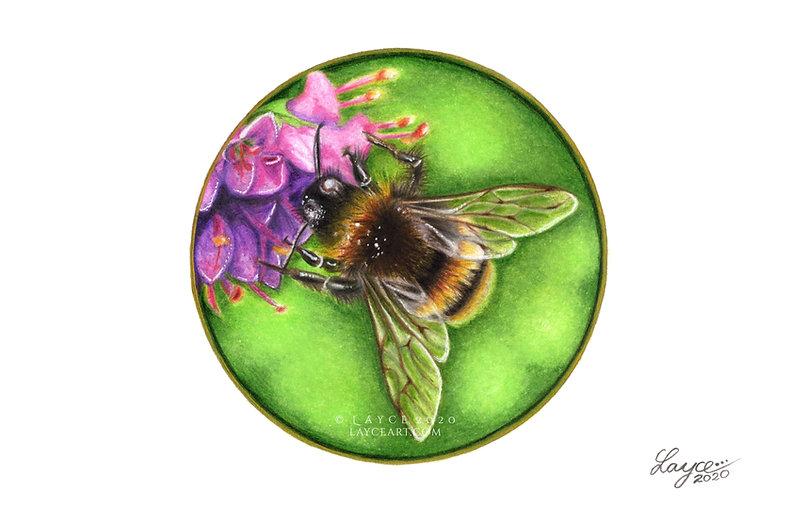 Bumblebee 600dpi funky.jpg