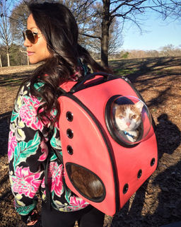 Cat in a Pack, Piedmont Park, Atlanta