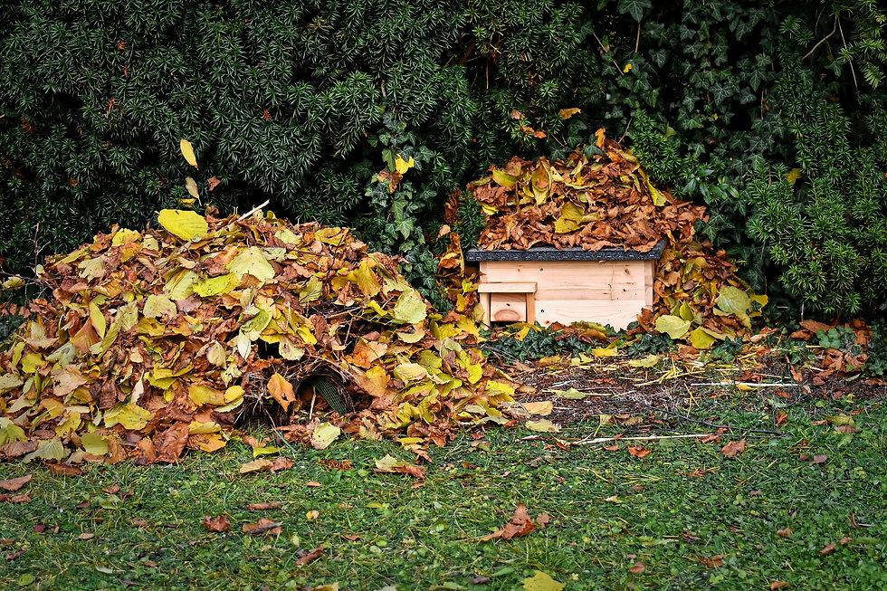 hedgehog-houses-4638624_1920.jpg