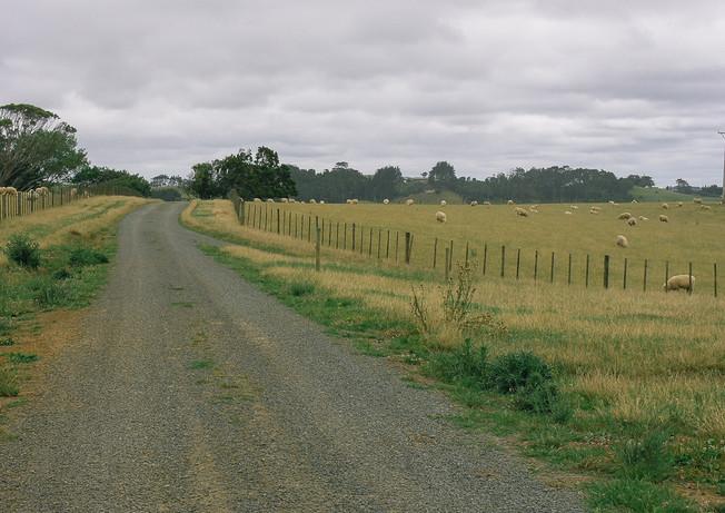 Houghtons Farm - Muriwai