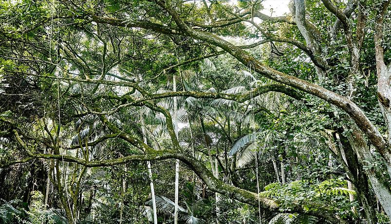 Sergio Kovacevick | Fotografia Fine Art | Decore seu ambiente com nossas obras fotográficas exclusivas | Decore com Fotografia de Florestas e Natureza…