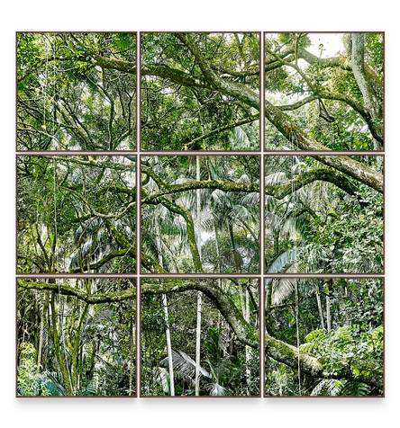SAVE THE ATLANTIC FOREST | Polyptych