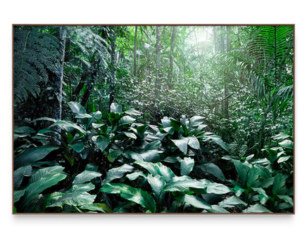 SAVE THE ATLANTIC FOREST