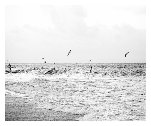 FLYING IN THE WAVE #3 B&W