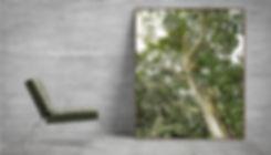 SK_FINE ART_PORTFOLIO_SAVE THE FOREST_20
