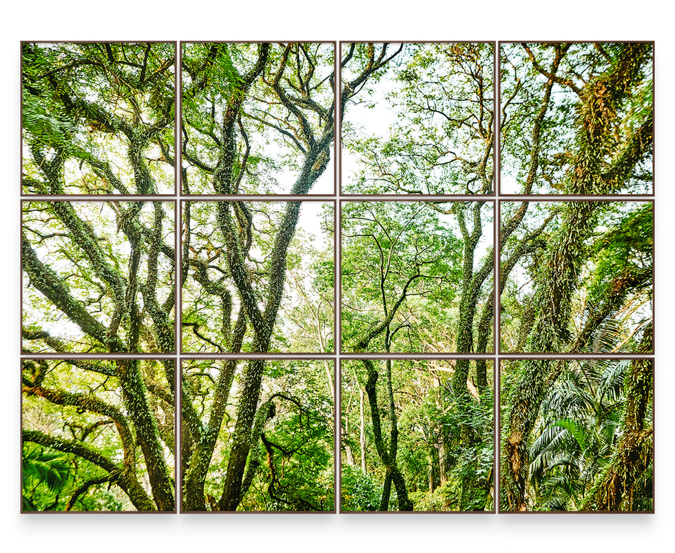 SAVE THE ATLANTIC FOREST   Polyptych