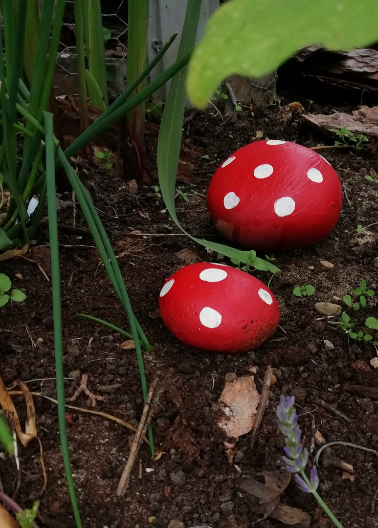 Some colourful mushrooms