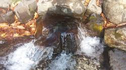 白老の水源地