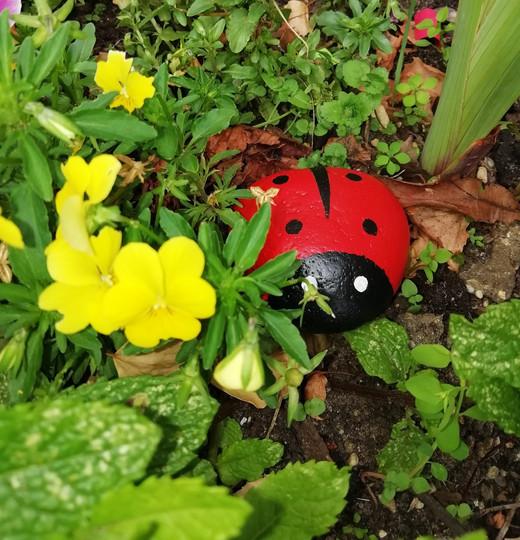 Our Ladybird beastie
