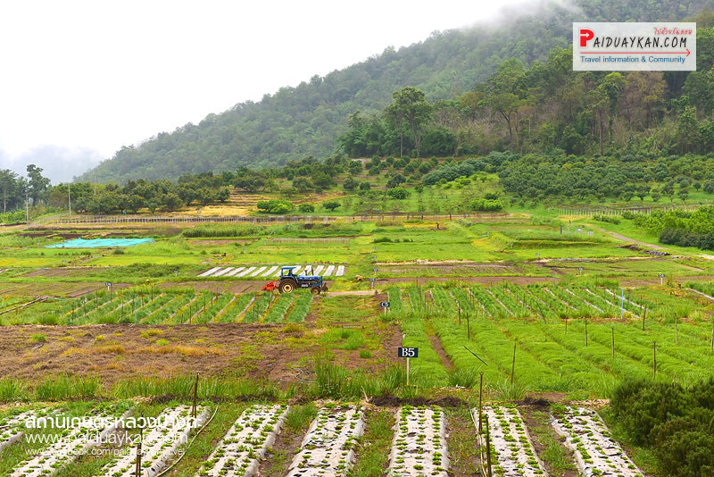 Royal Agricaltural Station Pang Da Chiang Mai Thailand