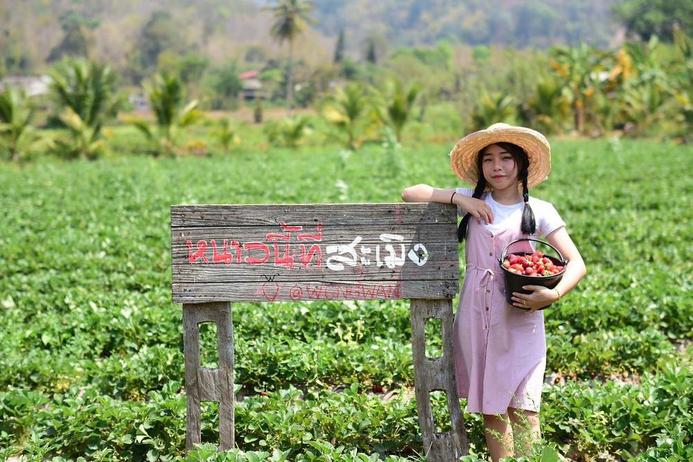 Wong Wan Strawberry Field Samoeng Chiang Mai