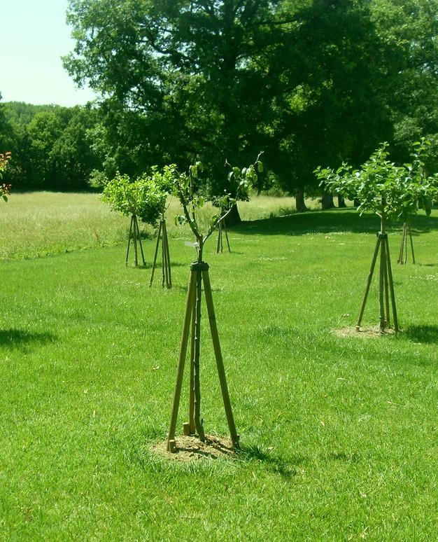 arbres-tuteures.jpg