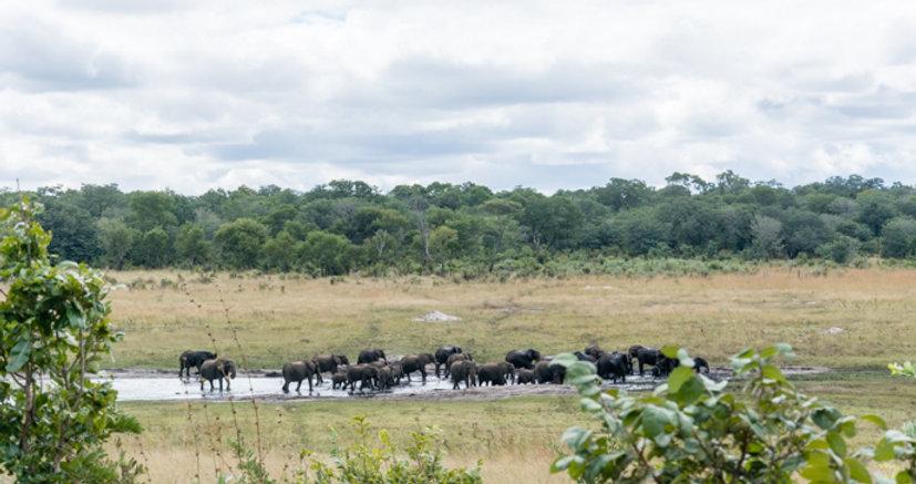 Elephant herd western Zimbabwe