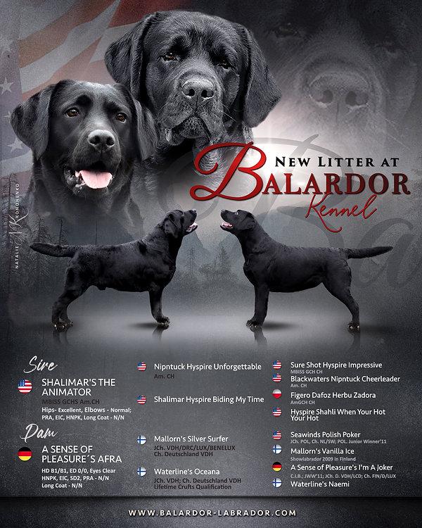 Balardor Labrador C-Litter.jpg