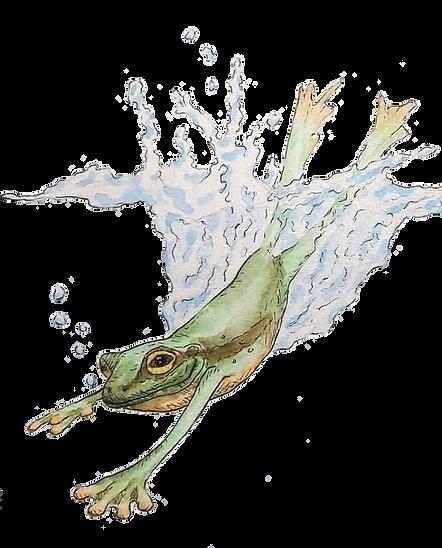Frosch freigestellt Kopie Kopie.png