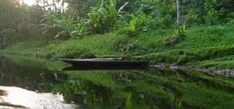 Amazon Rainforest Photo by Original Eve