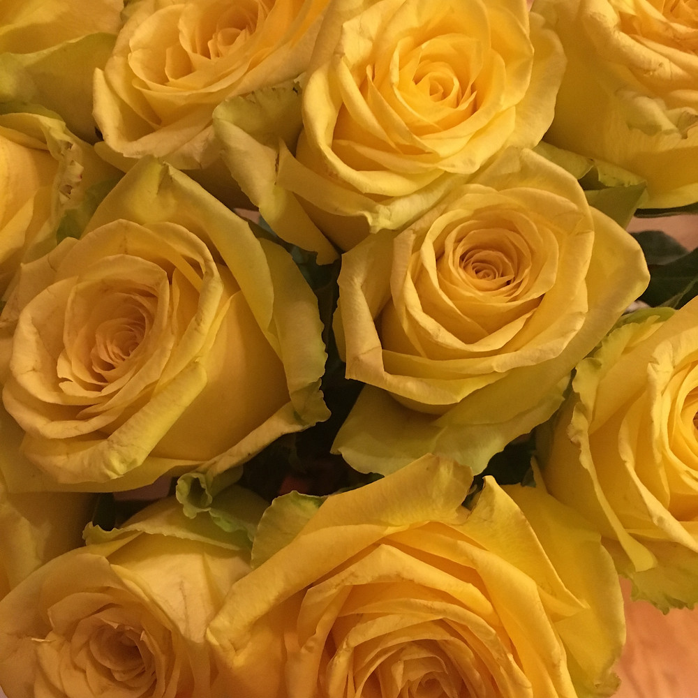 Shining Star of the WJA Yellow Roses