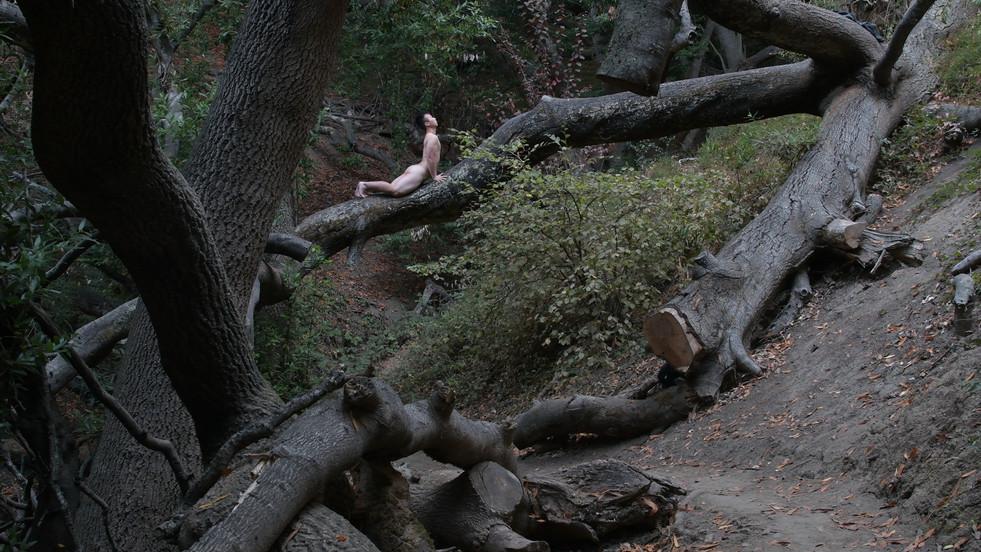 Claremont Canyon Regional Preserve
