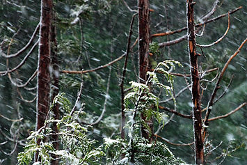 Stormy Forest