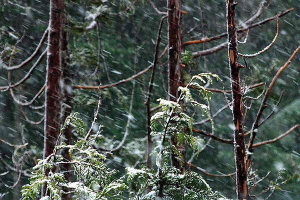 Stormy Foresta