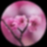 Logo start - 1000px2.png