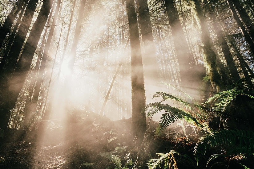 Sunburst Rainforest